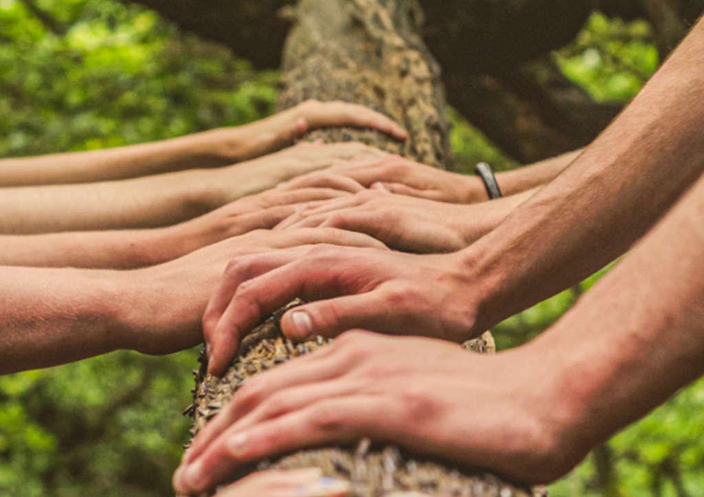 Das Foto zeig einen Baumstamm, auf dem diverse Hände liegen
